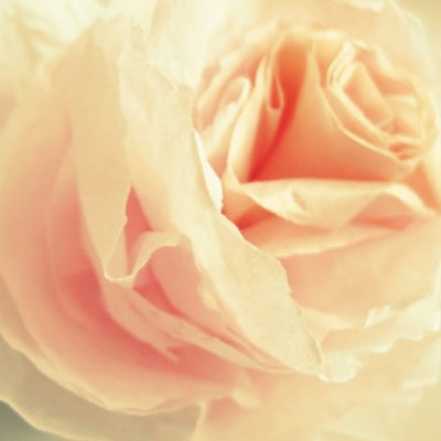 A rose tutorial just for you…