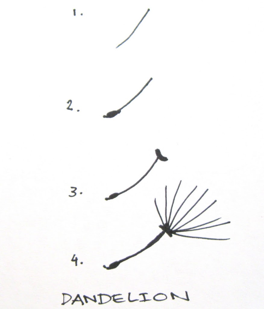 Do you doodle for How to draw a dandelion step by step