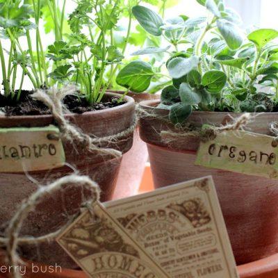 A little herb garden…