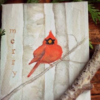 cardinalwatercolourcrfatberrybush1