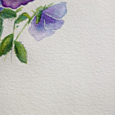 Pansies/Violas and some Watercolor