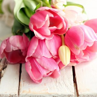 pinktulipsonfarmbenchcraftberrybush