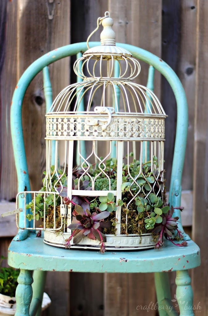 how to plant succulents in a birdcage. Black Bedroom Furniture Sets. Home Design Ideas