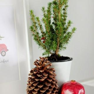 Christmasvignetteprintablecraftberrybush2