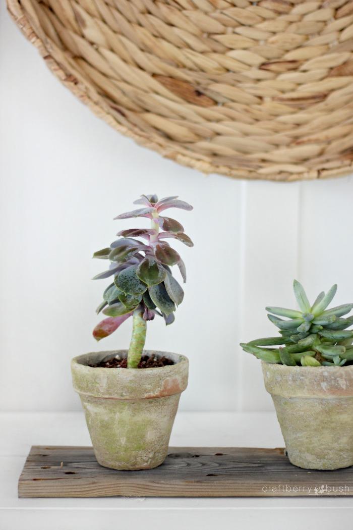 agedterracottawithsucculentcraftberrybush