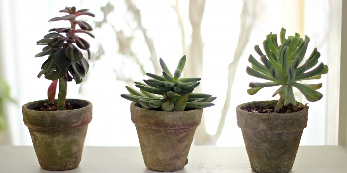 Antique terracotta pots DIY