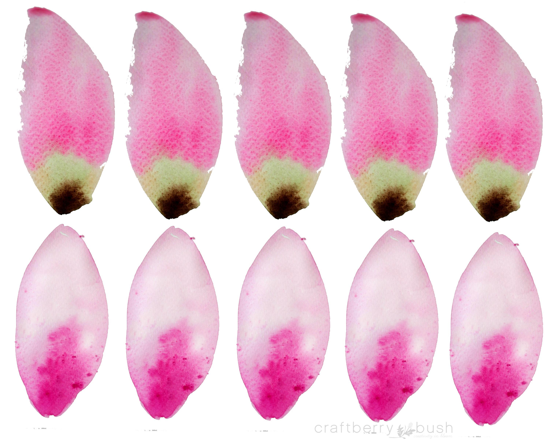 petalstemplatecraftberrybush