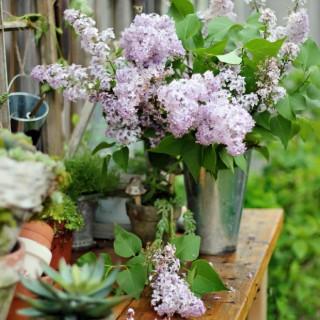 gardeningbenchcraftberrybush