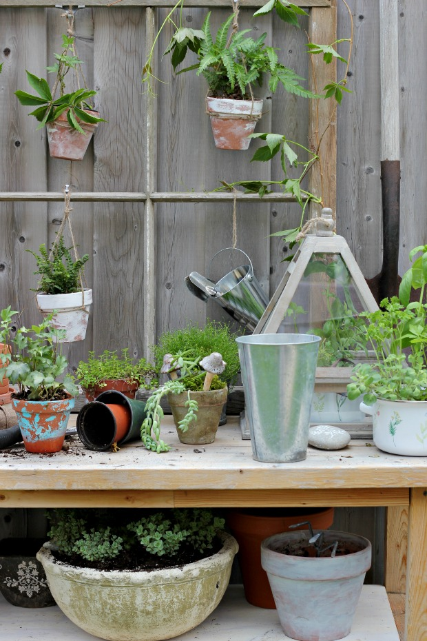 gardeningbenchcraftberrybush4
