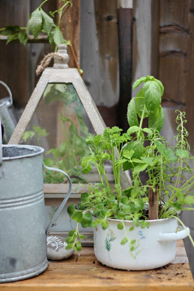 gardeningbenchcraftberrybushherbs