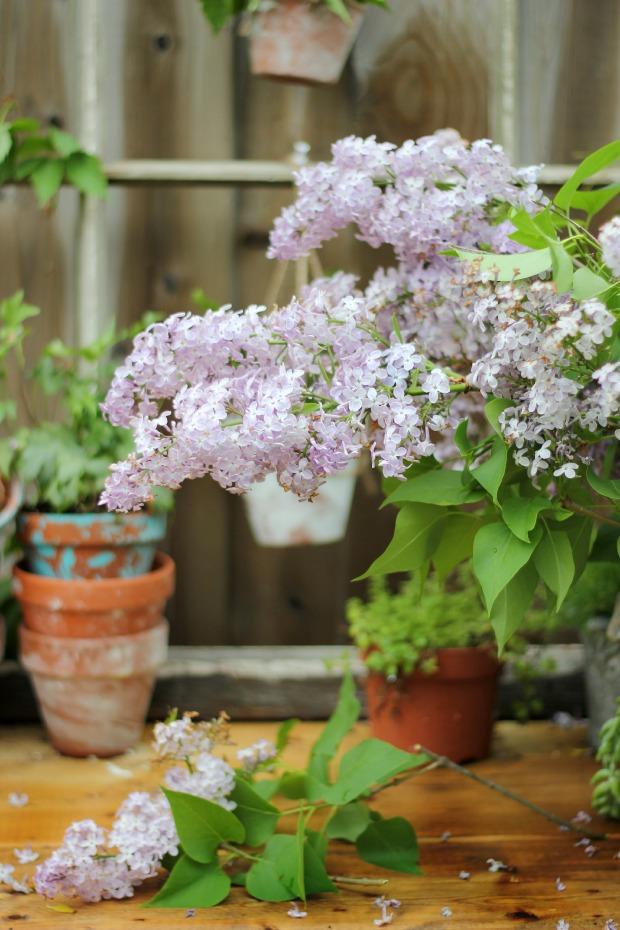 gardeningbenchlilacs2craftberrybush