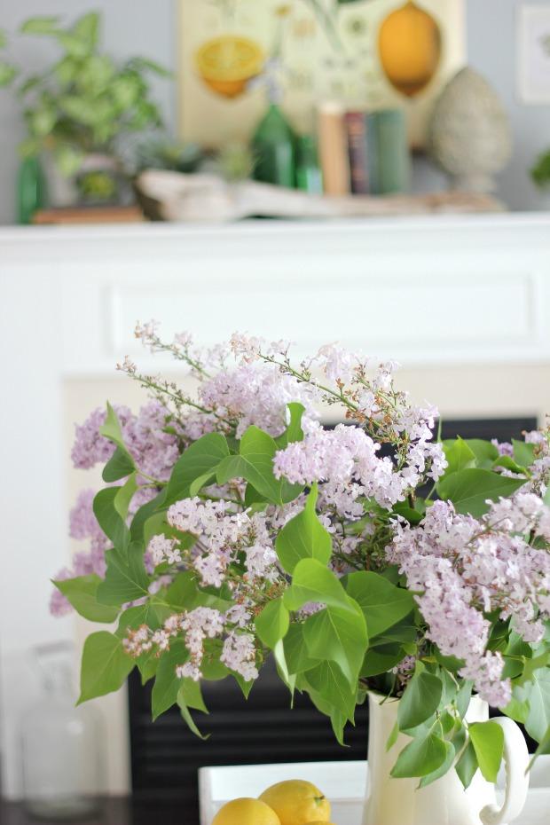lilacs.jps