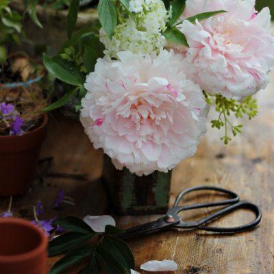 A Milestone for Craftberry Bush