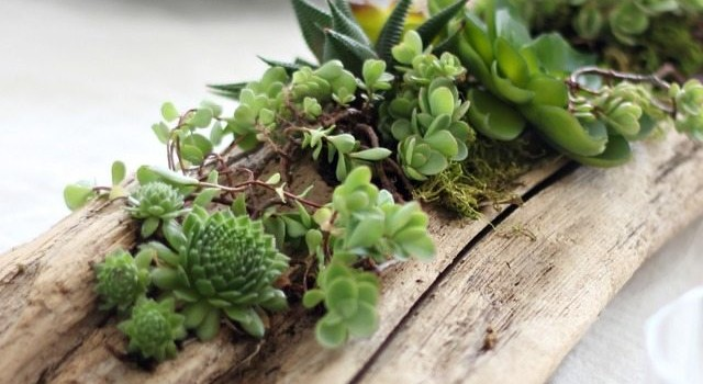 How to make a driftwood planter