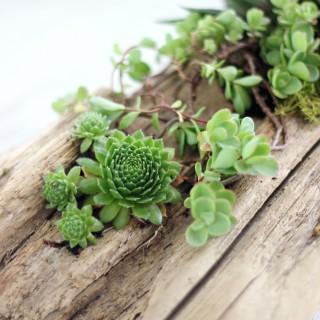 driftwood planter3
