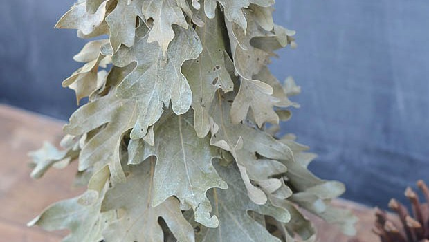 DIY Preserved Oak Leaf Tree
