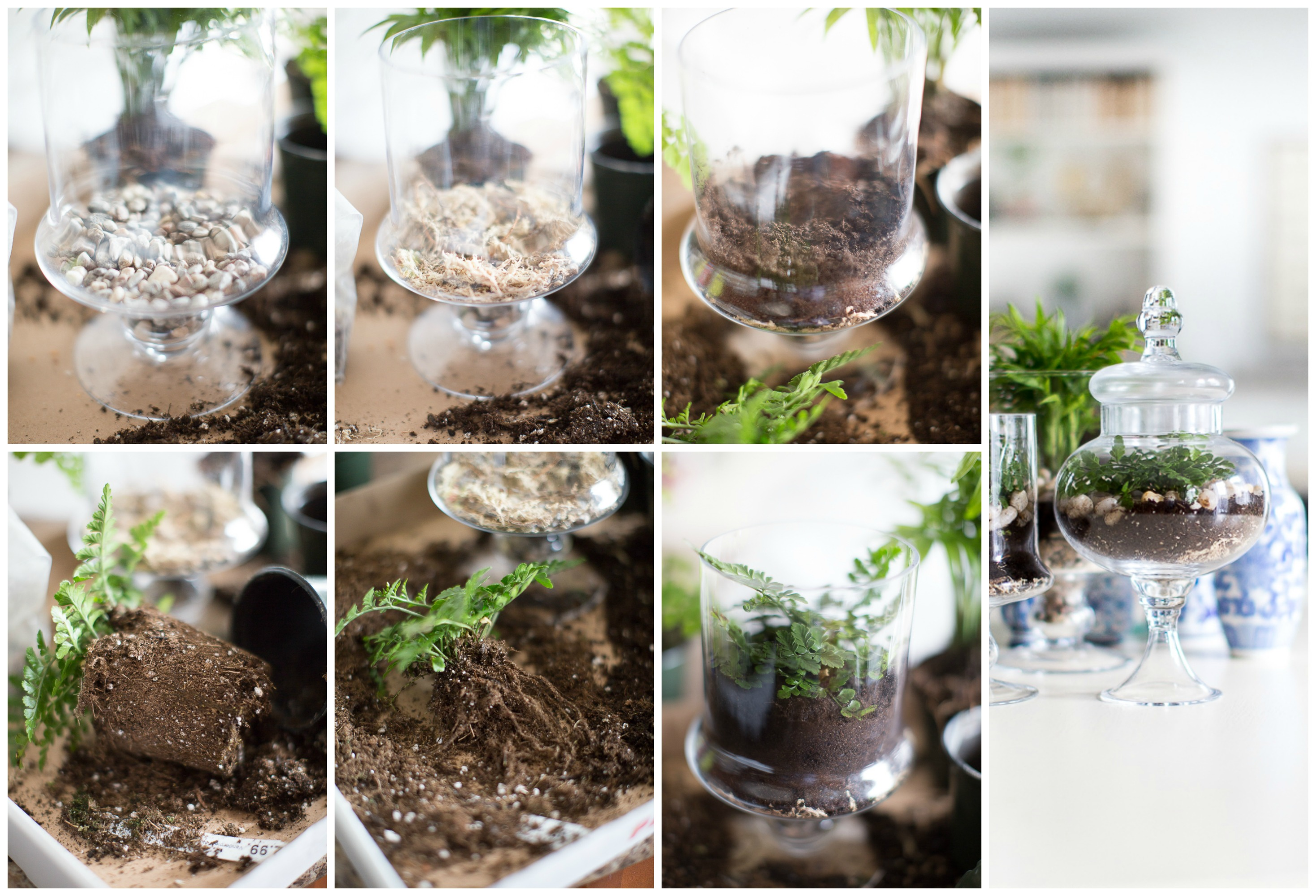 Glass terrarium diy