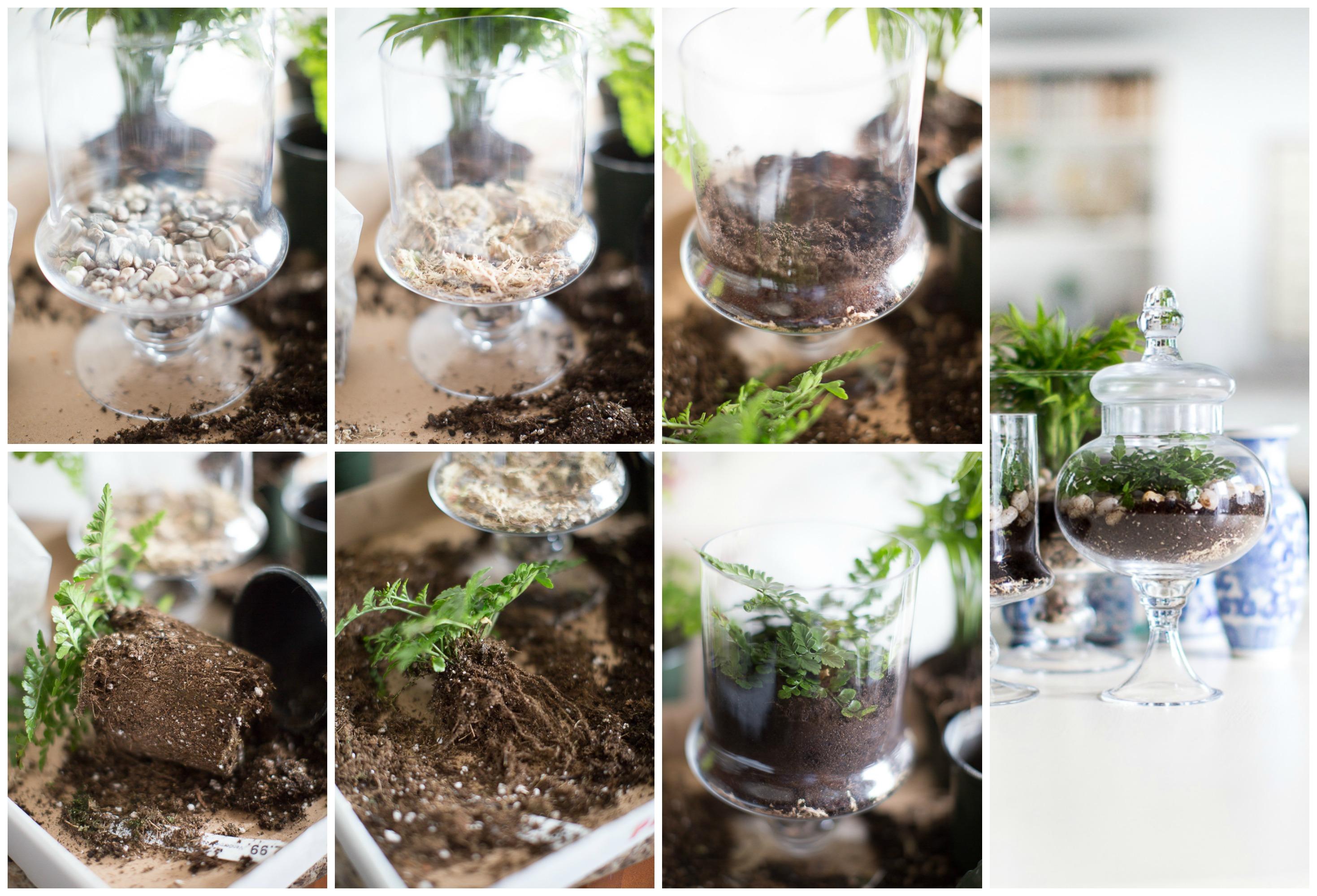 Glass terrarium diy