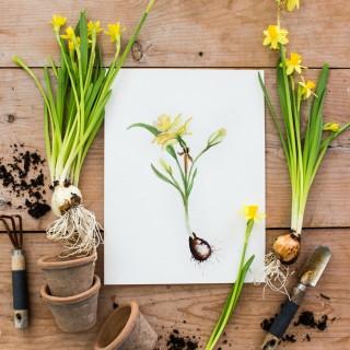 daffodilprintcraftberrybush