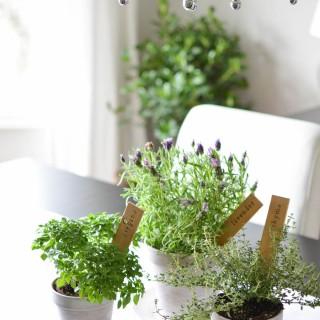 DIY-Herb-Markers_9