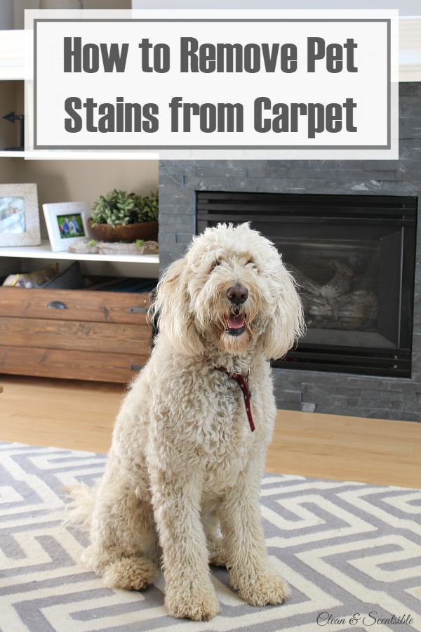 How-to-Remove-Pet-Stains-From-Carpet