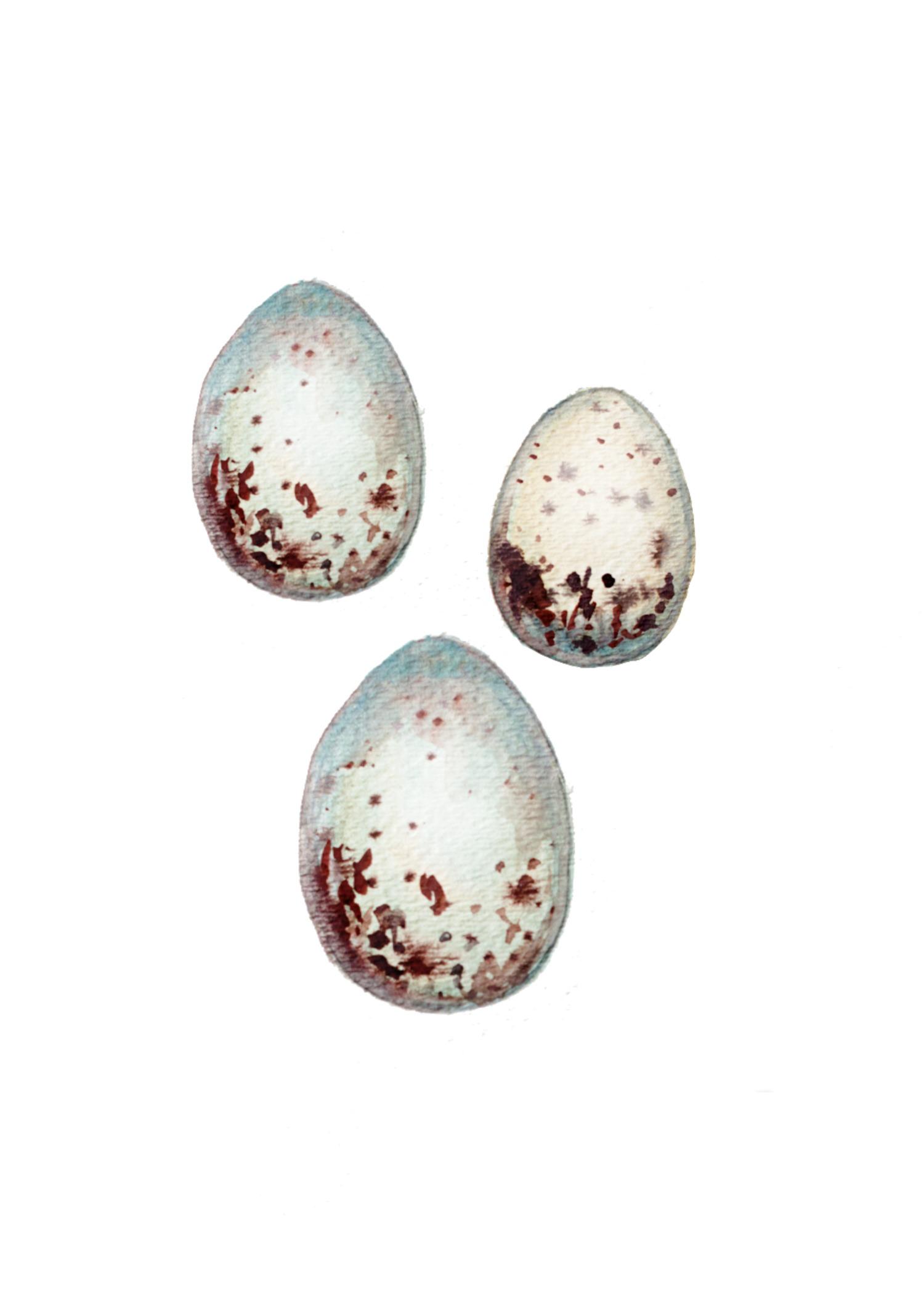 eggwatercolor