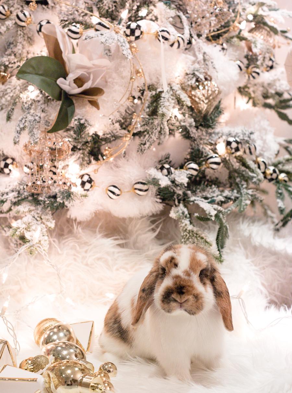 christmas bunny-3