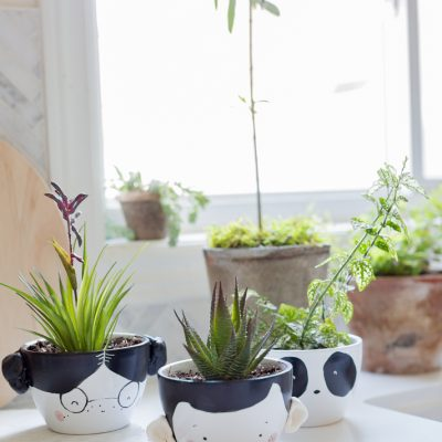 Adorable Face Planter DIY