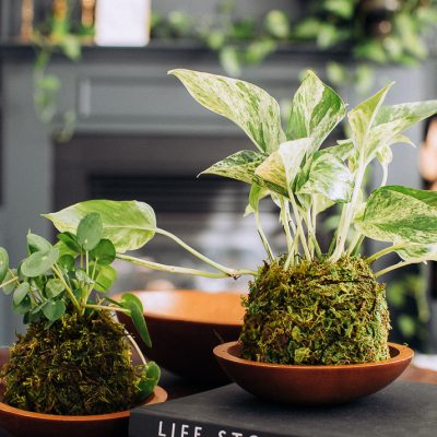 How to make a moss ball planter or Kokedama