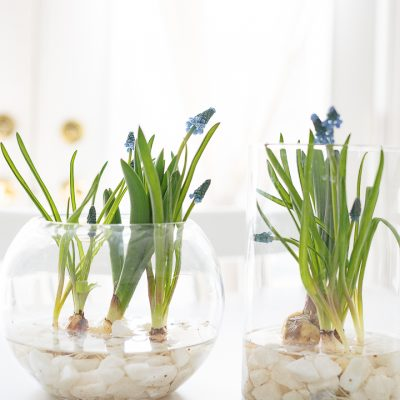 Easy Spring Bulb Arrangement