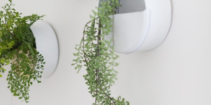 DIY Wall Planter using a Dollar Store cookie tin