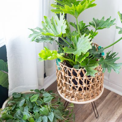 Metal plant table DIY using paper towel holders
