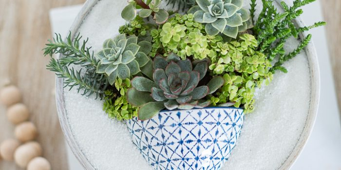 Succulent pot in a pot