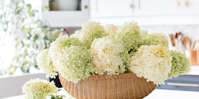 Limelight Hydrangea Basket Arrangement