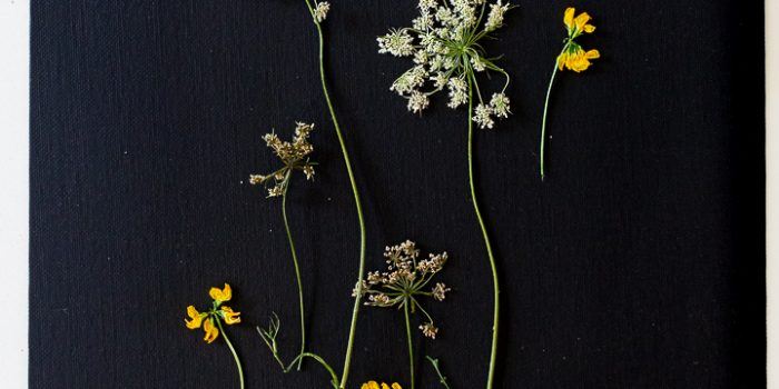 How to press flowers in seconds and make pressed botanical art